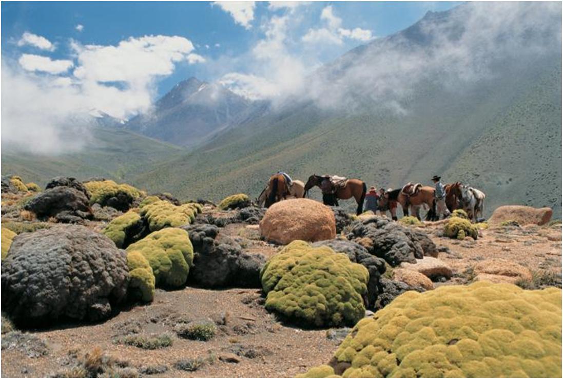 horseback ride in mendoza